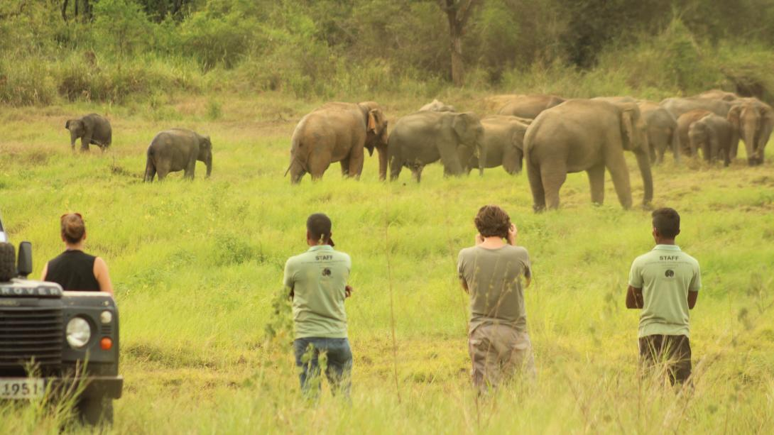Volunteers observe elephants in their natural habitat in the national park, Sri Lanka.